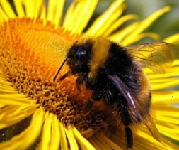 Pollen & Nectar Mix (BPN)