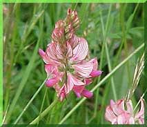 BGM 4 Wildflowers & Fine Grasses (20kg)