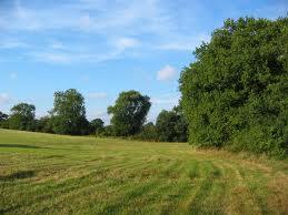 Meadow Hay Mixture (20kg)
