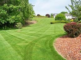 High Quality Fine Lawn - PRO 20 (20kg)