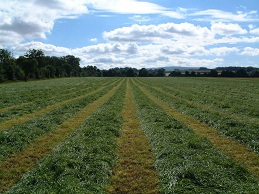 Short Term Silage Production (Organic) - Rapier