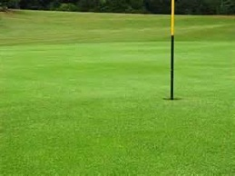 Greens Renovation - PRO 15 (10kg)