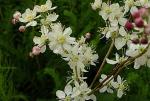 Calcareous Soils - PRO Flora 4