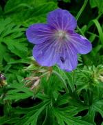 Damp Loamy Soils - PRO Flora 3