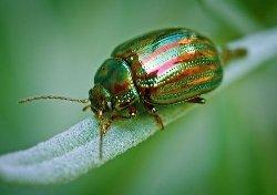 All Margins & Beetle Banks - Habitat (BGM 1)