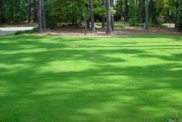 Shady Lawns - PRO 60 (20kg)