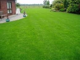 General Purpose Lawn Seed - PRO 51 (10kg)