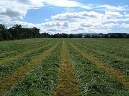 Short Term Silage Production (Organic) - Rapier