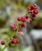 Acid Soils - PRO Flora 2